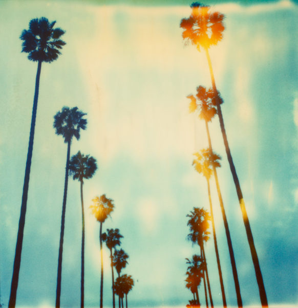 palm trees art