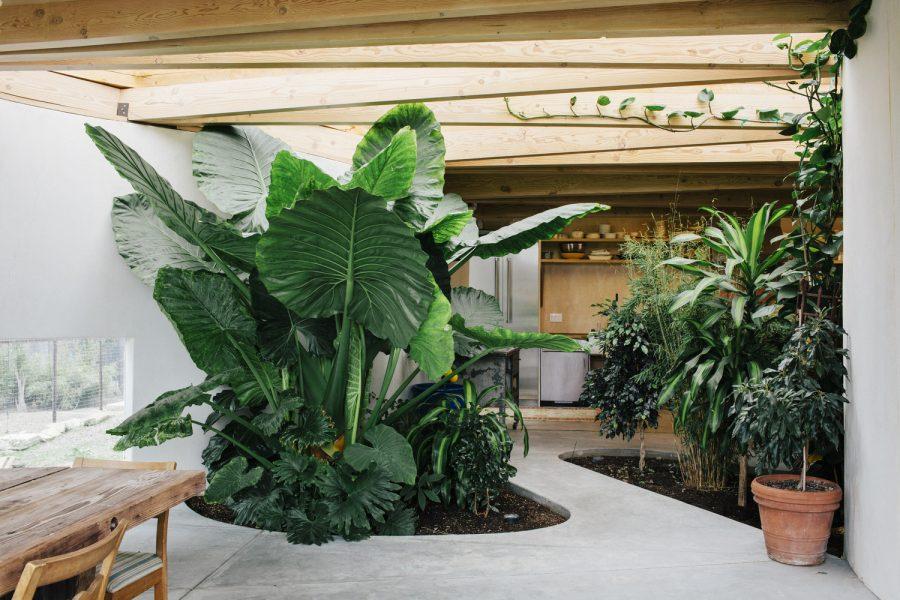 Interior Garden by Mork-Ulnes Architects